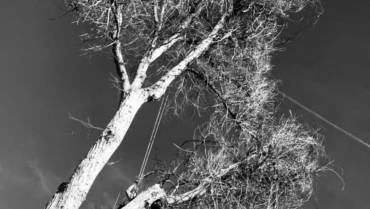 Quality- Professional Arborist knowledge