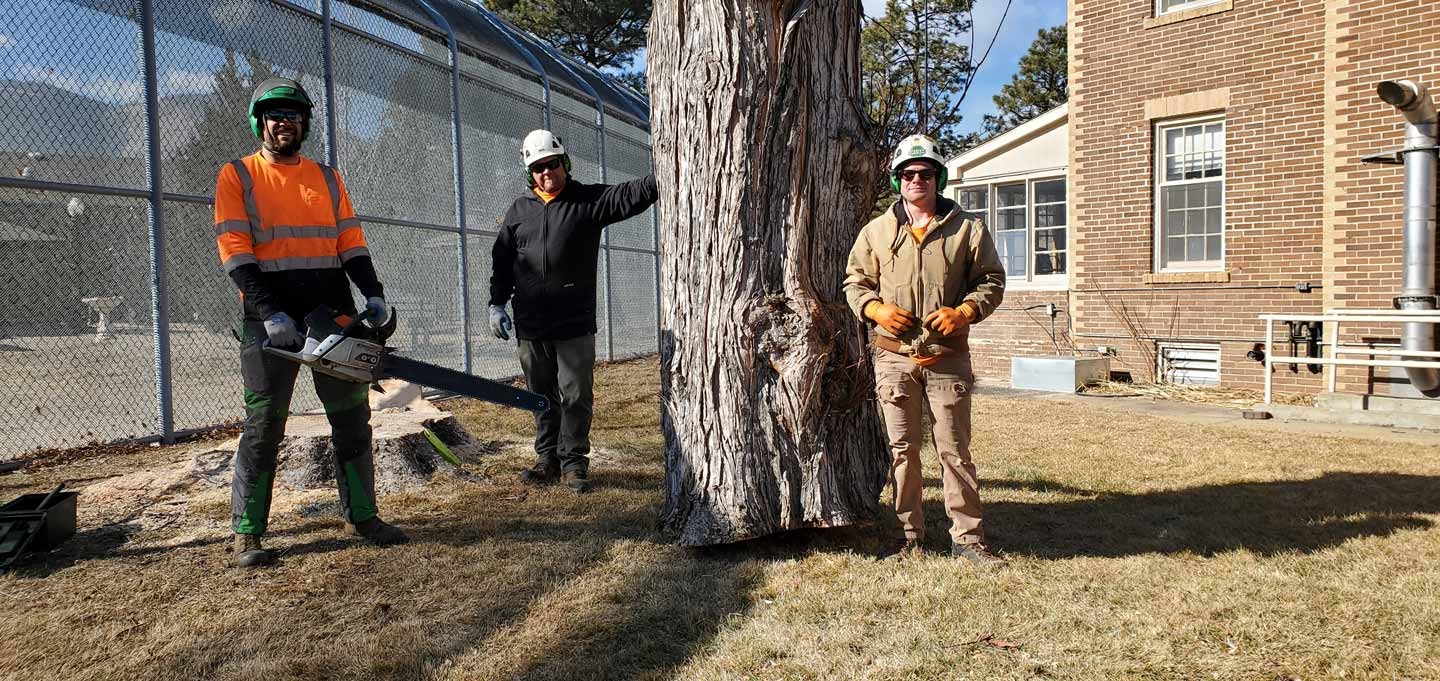 service to cut down trees in the denver area